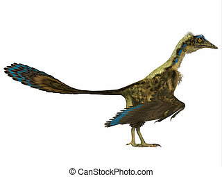 Archaeopteryx Side Profile - Archaeopteryx is the most...