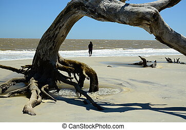 Arched driftwood - An arched pieced of driftwood on the ...