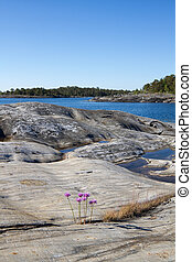 archipiélago, paisaje., rocoso