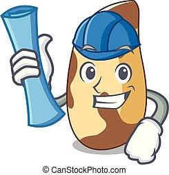 Architect brazil nut character cartoon