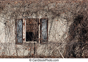 An old window on a military structure, in a state of decay, is covered with dead vines.