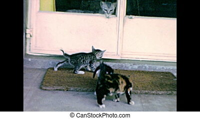 Archival of little cats playing - little cats playing on the...