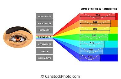 arco íris, perceived, cor, escola, spectrum., luz, ondas, educacional, diagrama, visível, comprimento, human, eletromagnético, física, waves., eye.