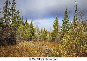 arco íris, selva
