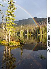 arco íris, sobre, selva, lago