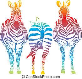arco irirs, zebra