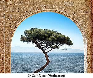 arco pedra, e, árvore