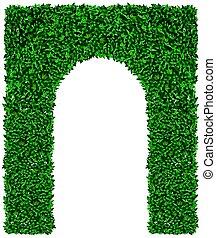 arco, uva verde, hera, textura