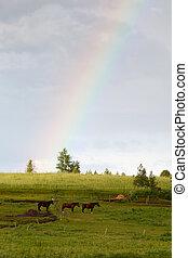arcobaleno, e, cavalli