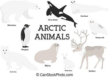 Arctic animals collection. Set of flat minimal vector...