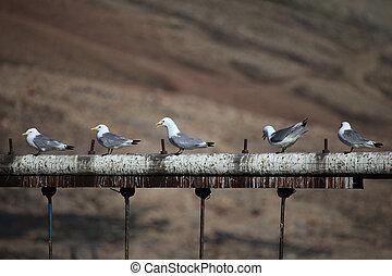 Arctic birds resting in Svalbard, Norway