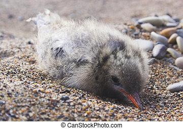 Arctic chick