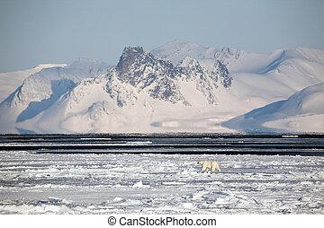Arctic winter landscape, polar bear - Arctic landscape with...