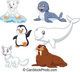 arctics, ensemble, animaux, collection