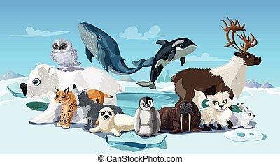 arctique, animaux, dessin animé, gabarit