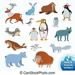 arctique, ensemble, animaux, antarctique