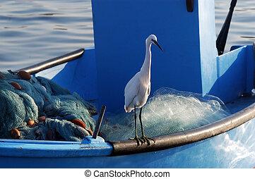 Ardeidae Bird in Acre Israel - A Ardeidae bird rests on a...
