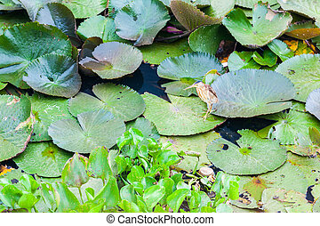 Ardeidae Heron Hunting on Lotus