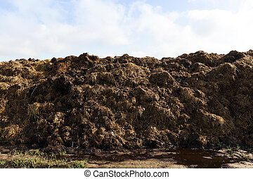 are landed in a pile of manure