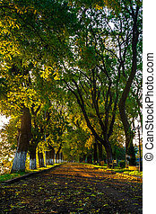 old city park with lantern - area of the old city park with...