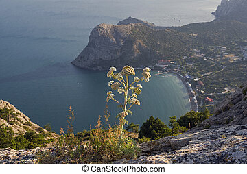 Areal view on a small resort town on the Black Sea coast of Crimea.