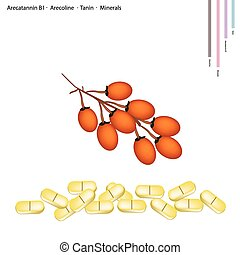 Areca Nut with Arecatannin B1, Arecoline and Tanin