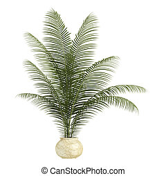 Areca palm houseplant with multiple fronds growing in a...