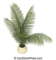 Areca palm houseplant