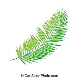 Areca Palm Leaf Icon Closeup Vector Illustration