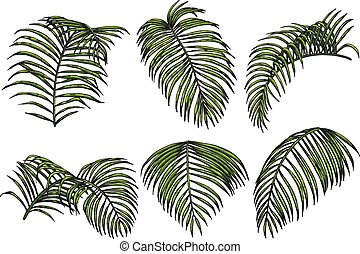 Areca palm sketch by hand drawing.