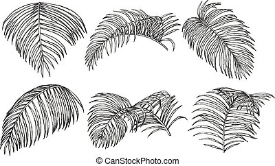Areca palm sketch by hand drawing