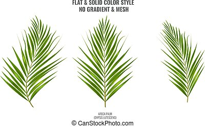 Areca palm sketch or watercolor style by hand drawing. Palm leaf for your design. Vector Illustration.