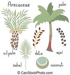 arecaceae, rośliny, komplet