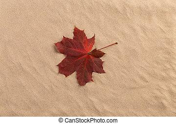 areia, fundo, com, outono, leaves.