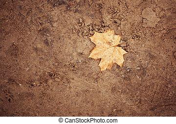 areia, fundo, com, outono, licença