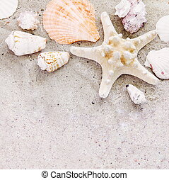 areia, fundo, starfish, escudos mar