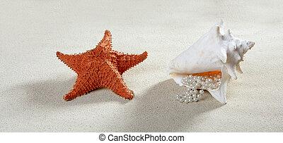 areia praia, colar pérola, concha, starfish, verão