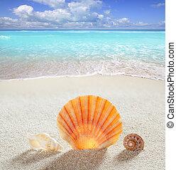 areia praia, concha, tropicais, perfeitos, férias verão