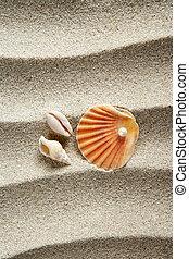 areia praia, pérola, escudo moluscos, férias verão