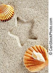 areia praia, verão, escudo moluscos, estrela, impressão, férias