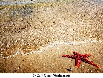 areia, starfish