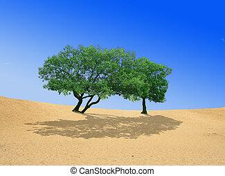 arena, árboles