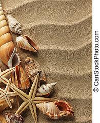 arena, cáscara, mar