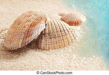 arena mojada, conchas marinas