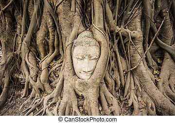 arenito, buddha