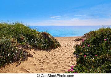 arenque, ensenada, nosotros, massachusetts, capa, playa,...