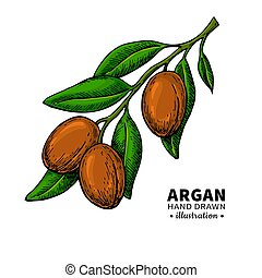 Argan vector drawing. Organic essential oil sketch. Isolated...