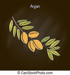 argania, spinosa, argan
