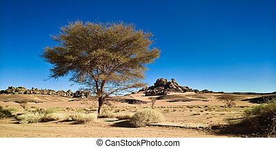 argelia, parque nacional, moul, paisaje, naga, najjer,...