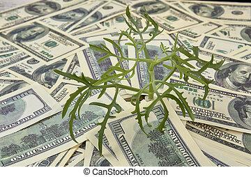argent, croissance, concept.